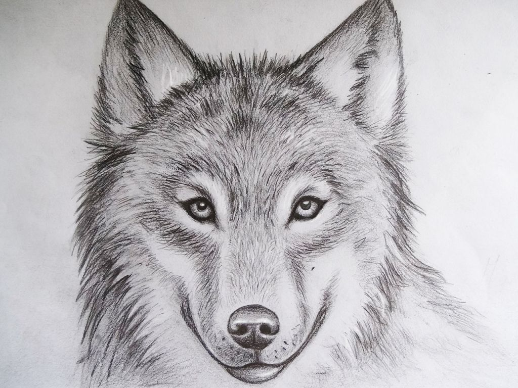 Cool Drawings Of Animals Pencil Art Drawing Wolf face