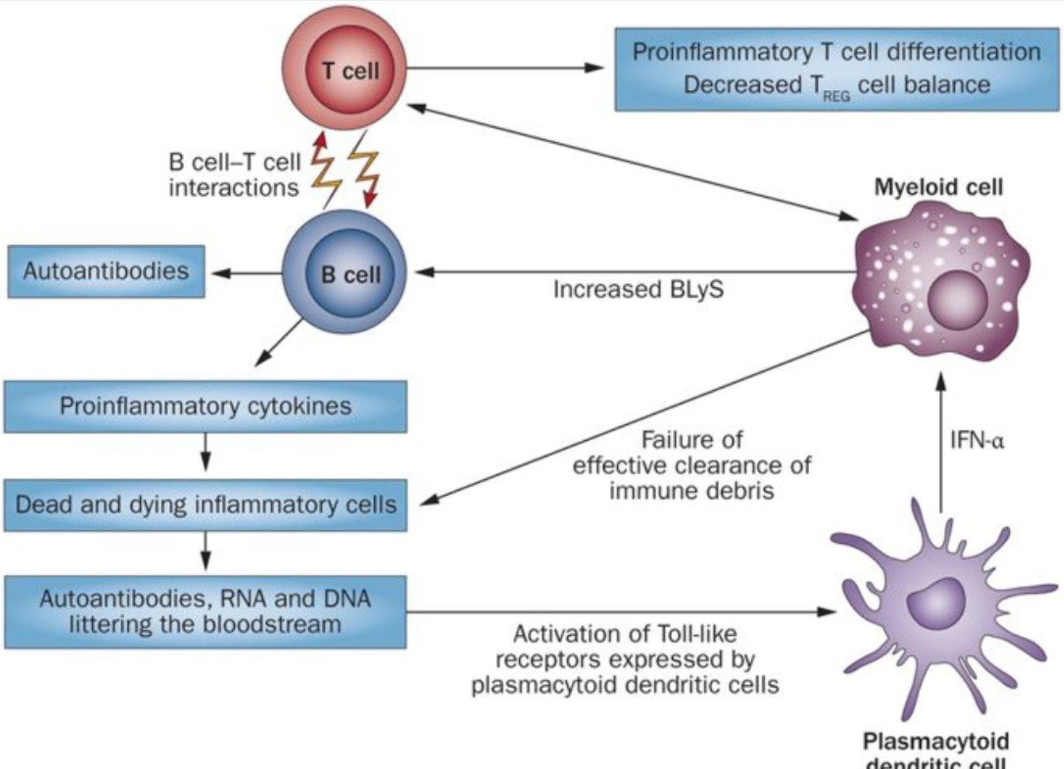 Pin On The Lupus Malaria Tradeoff How Genetics Contribute To Lupus