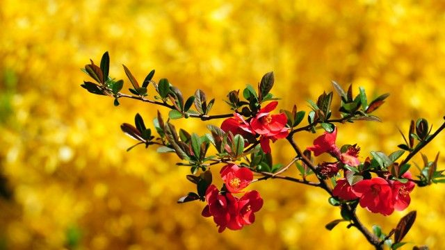 45 Hd Beautiful Wallpapers Backgrounds For Free Download Beautiful Wallpapers Backgrounds Beautiful Wallpapers Beautiful Flowers Hd Wallpapers