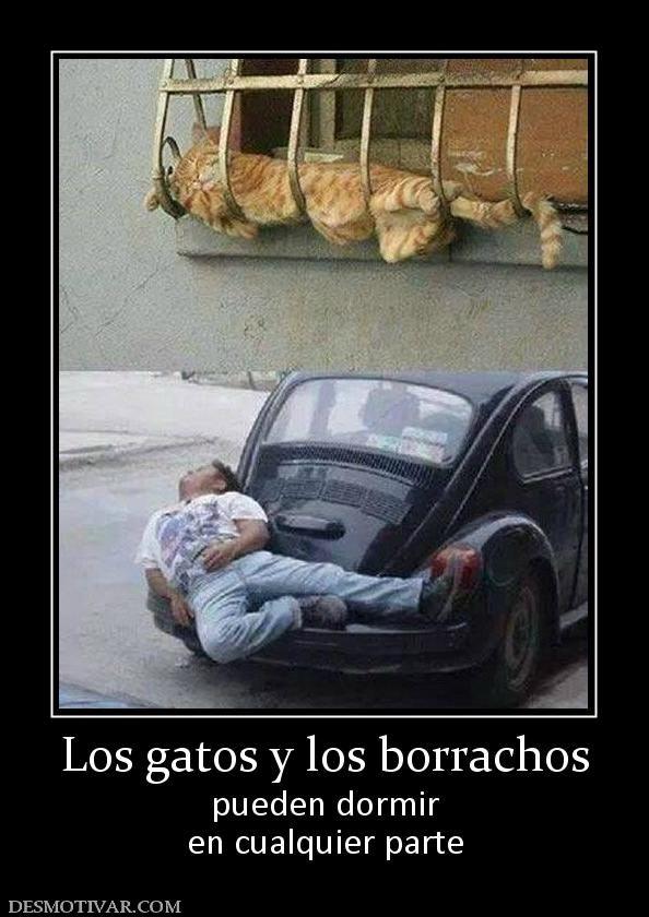Desmotivaciones Los Gatos Y Los Borrachos Pueden Dormir En Cualquier Parte Humor Funny Memes Funny