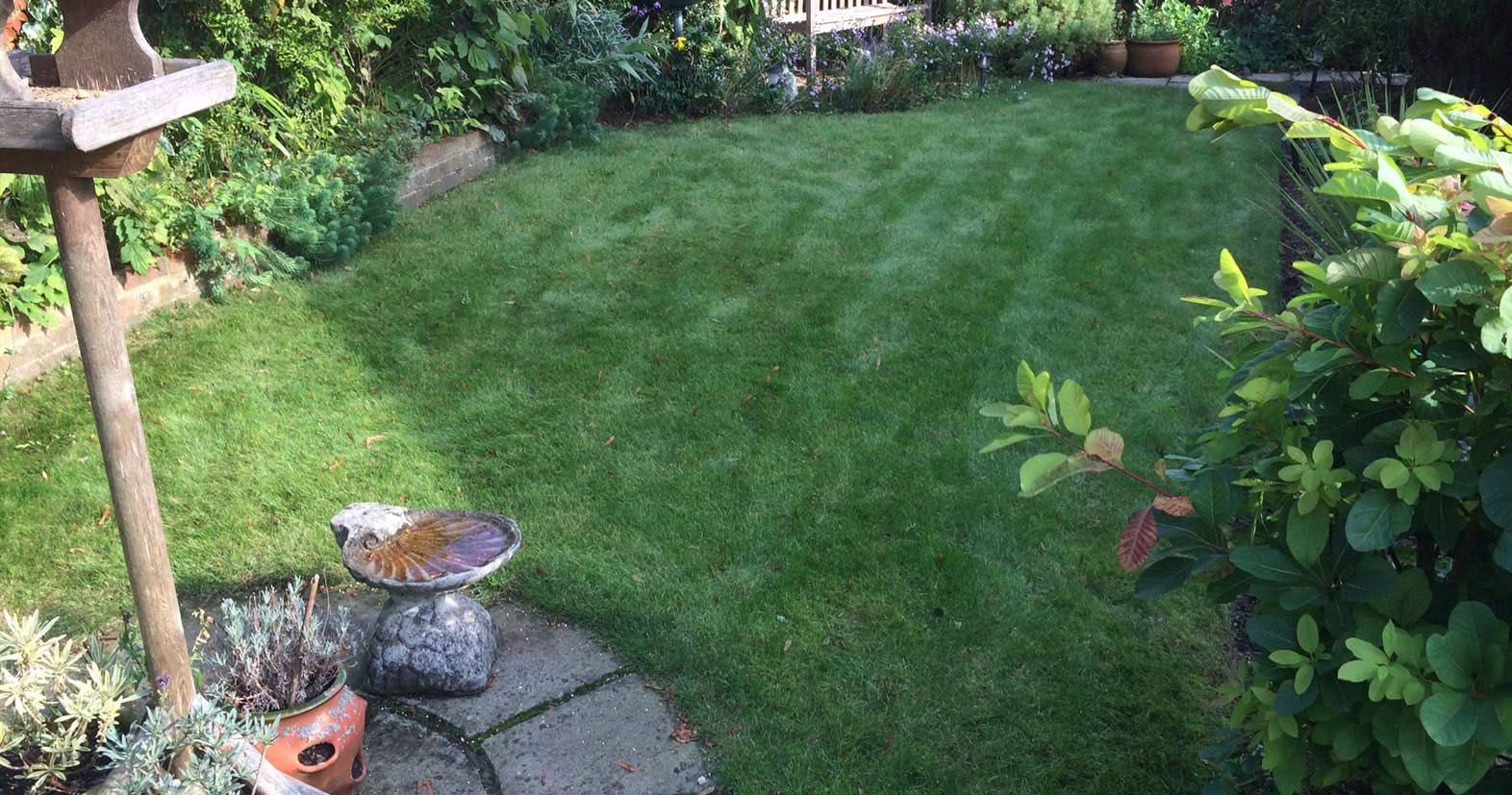 Get a healthy green lawn this summer with our lawn care
