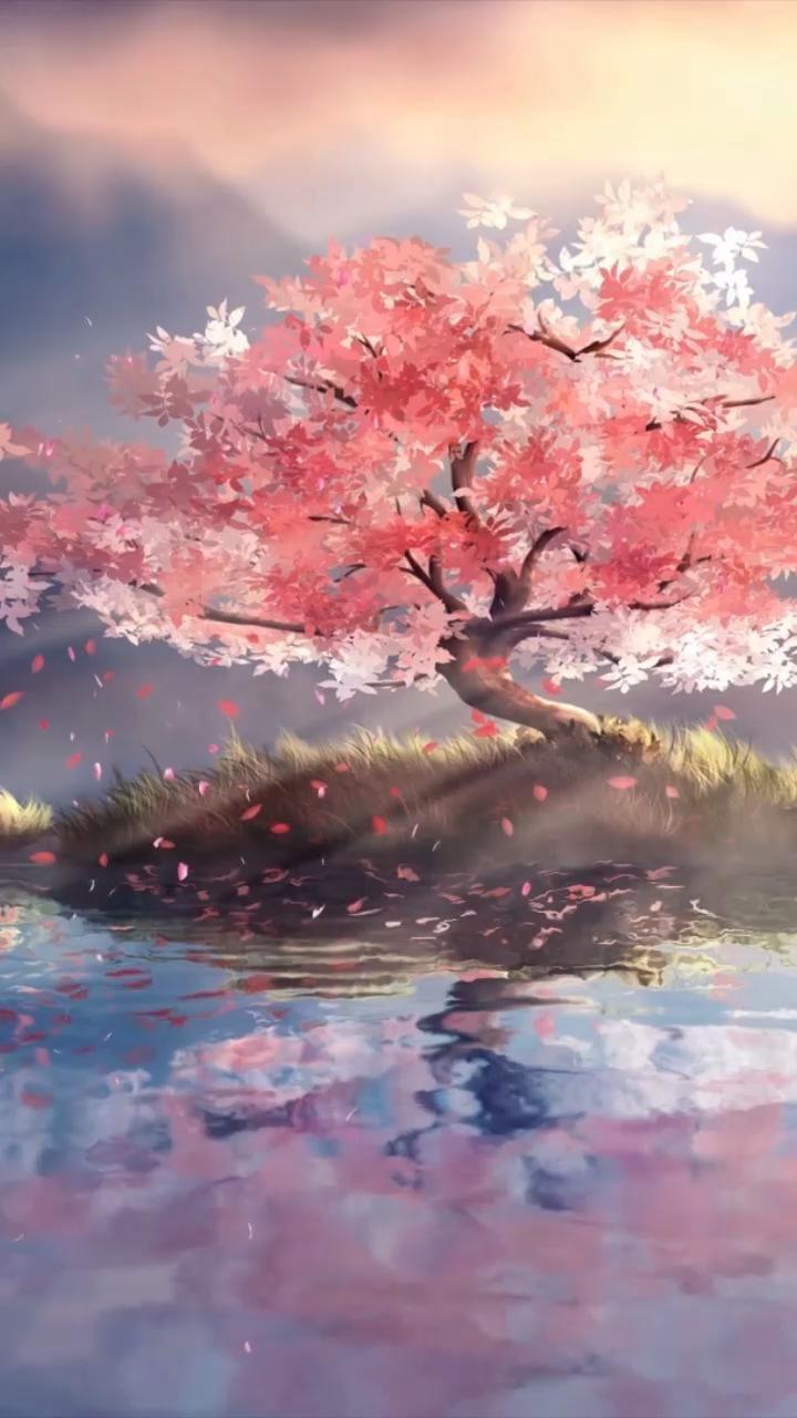 Cherry Blossom Video Anime Scenery Wallpaper Cherry Blossom Wallpaper Iphone Cherry Blossom Wallpaper 21 anime sakura wallpaper