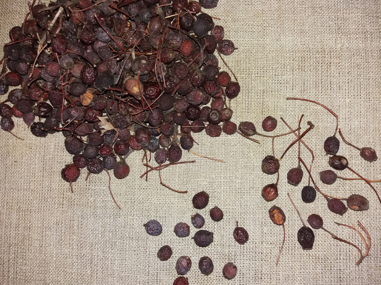 Bulk herbs spices organic organic herbal tea - Hawthorn Berries Dried Berry Organic Bulk Herbs Herb Tea Herbal Medicine Loose Detox Garden Decor Whitehorn Fruit Fall Autumn Berry