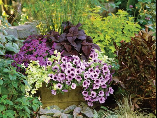 flowers in containers...can't wait for spring to get here!