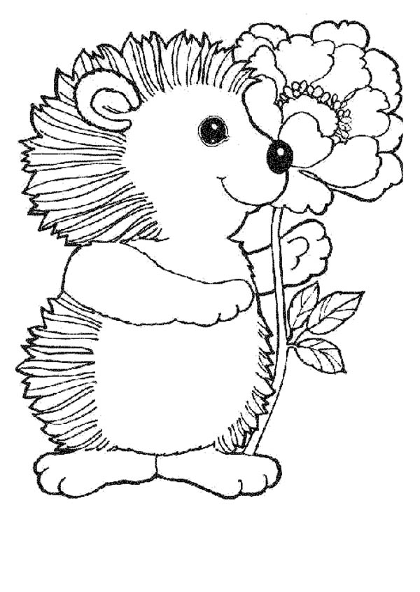 Pin On Hedgehogs Coloring Pages