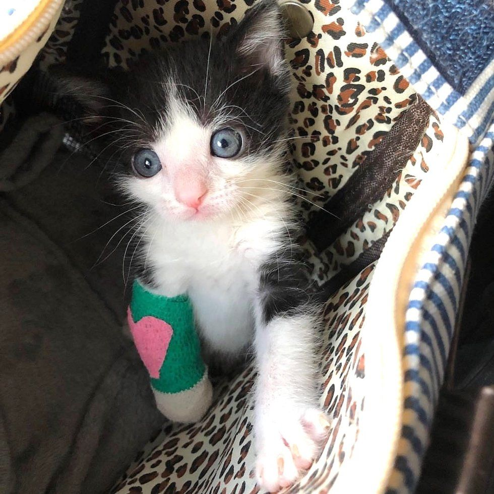 Tiny Kitten With Broken Leg Proves That He Will Heal Up And Walk