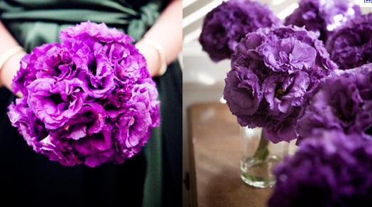 purplellisianthus