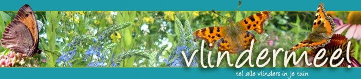 Tel de vlinders in uw tuin. | Medemblik Actueel - het nieuws voor Medemblik altijd bij de handMedemblik Actueel - het nieuws voor Medemblik altijd bij de hand