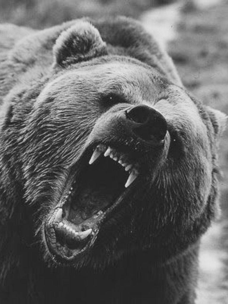 Женская лига медведева фото этом