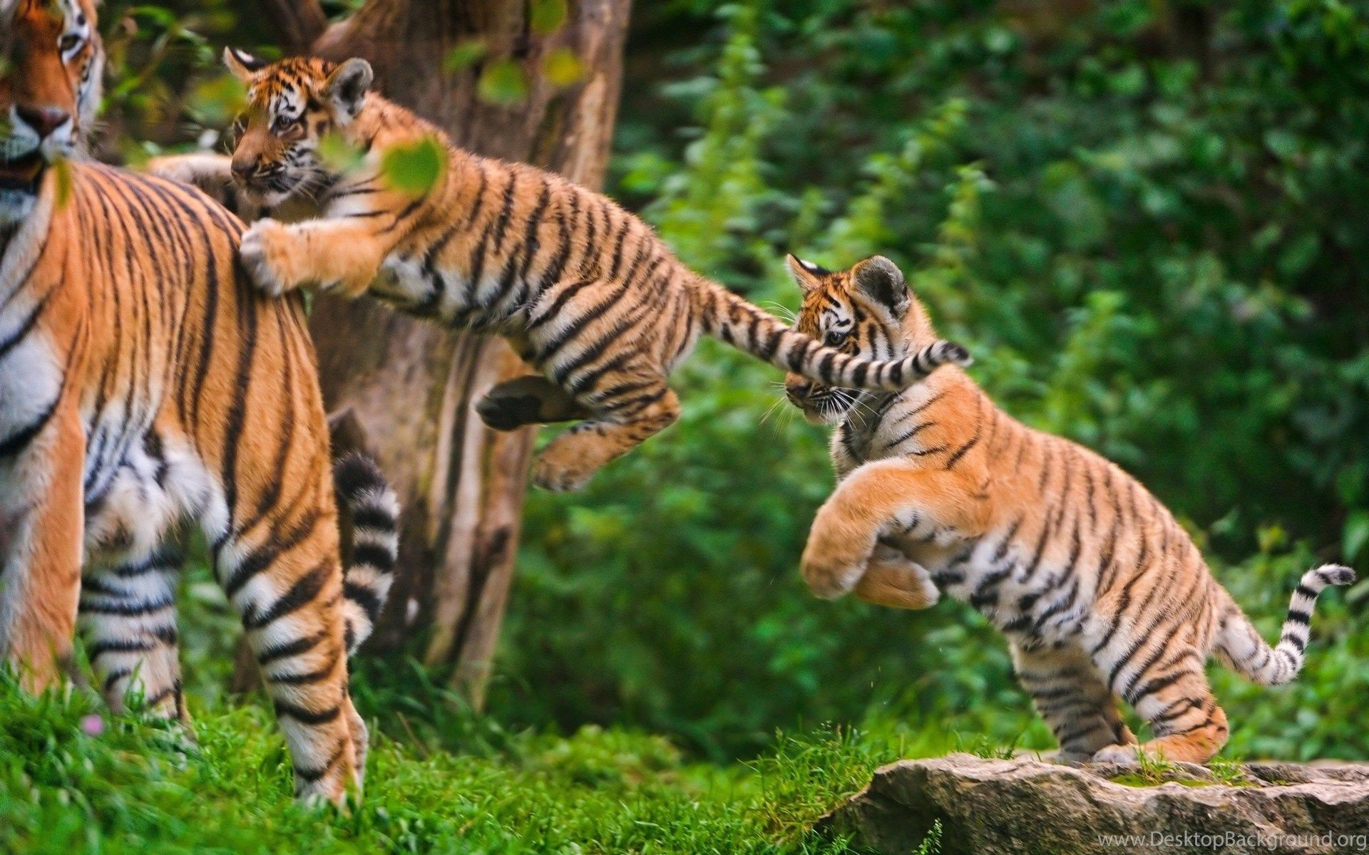 Explore Panna National Park Mother and baby animals