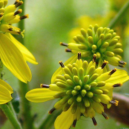 Yellow Whatchamacallits., via Flickr.