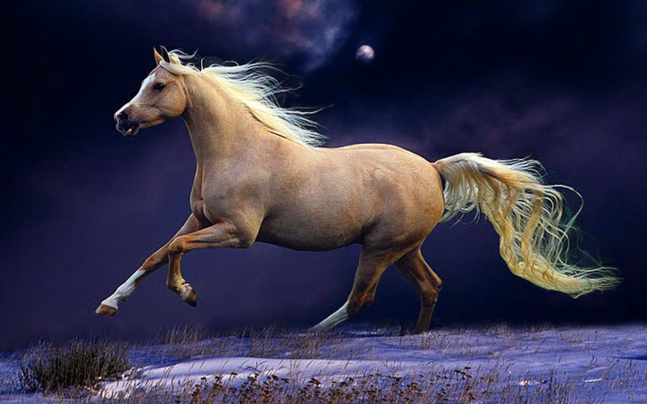 Simple Wallpaper Horse Night - 673a70722f221440c6f782ab822937f8  Photograph_154277.jpg