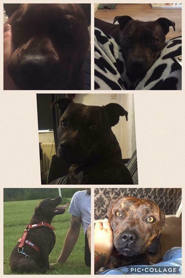 Missing Carr Hill Gatesheadmale Entire Dog Not Chipped Missing Since December 2016 Please Share Losing A Dog Dogs Terrier