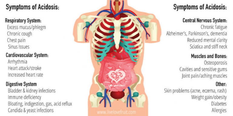 Every organ in the body is affected by level of acidity our lungs every organ in the body is affected by level of acidity our lungs bones ccuart Gallery