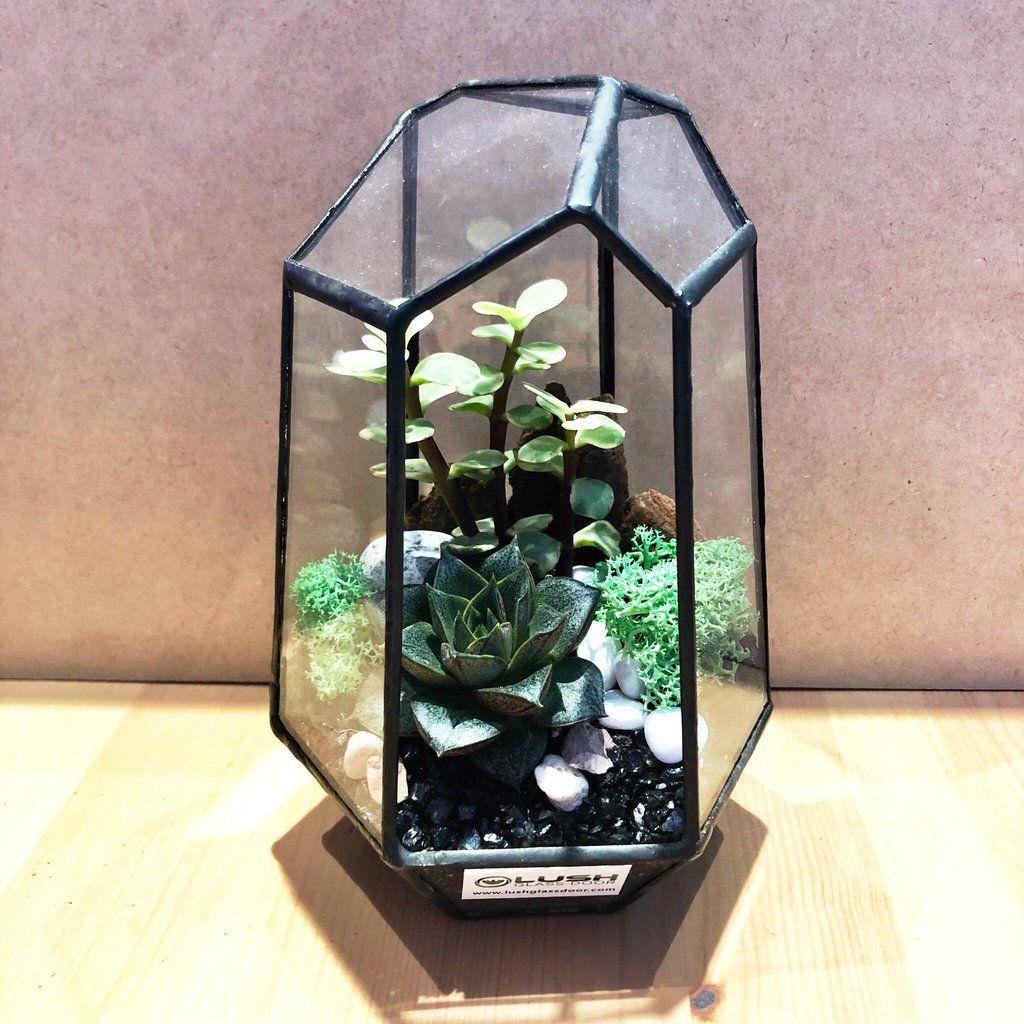Fanella Succulents Arrangement in Diamond Shape Geometric
