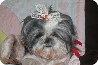Rochester Ny Shih Tzu Meet Poppy A Dog For Adoption Pets