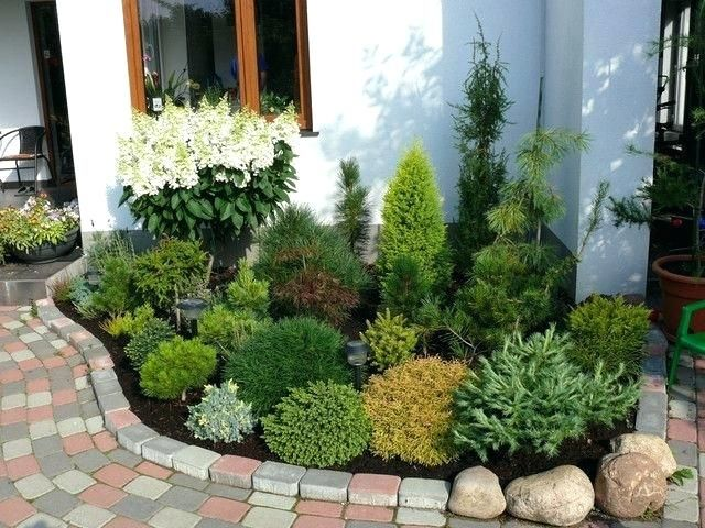 Small Evergreen Shrubs For Landscaping Dwarf Conifer Landscaping Dwarf Evergreen Shade Shrubs For Landscaping Small Front Yard Landscaping Evergreen Landscape