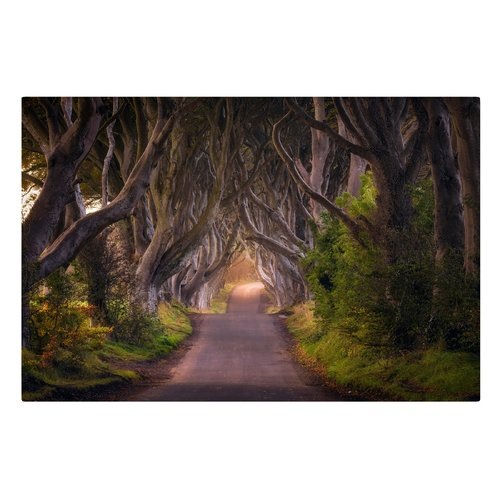East Urban Home Tree Tunnel Graphic Art Print On Canvas Tate