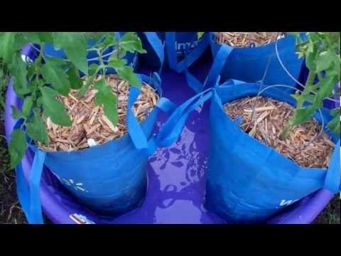 Phenomenal Sub Irrigated Kid Pool Grow Bag System
