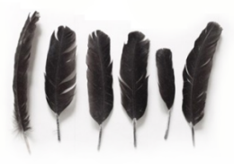 Raw Tropical Interiors  Tao of Sophia ~ETS #feathers