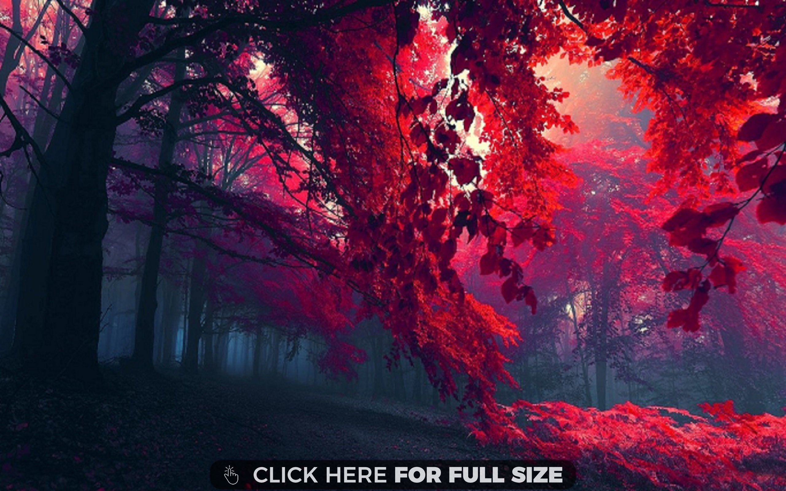 Red Forest Forest Wallpaper Tree Hd Wallpaper Scenery