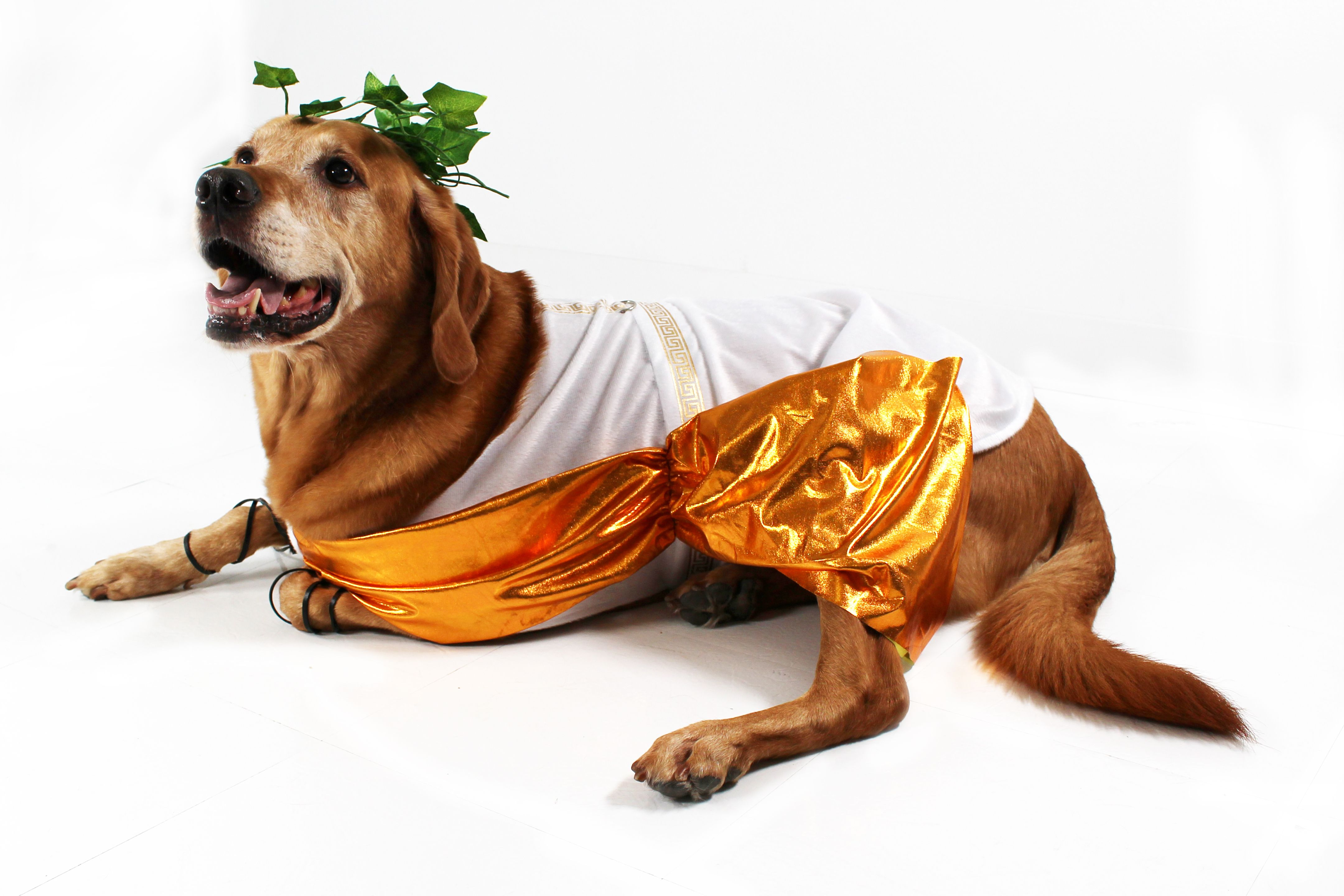 Just A Few Months Until Halloween Toga Party Dog Costume Dog Halloween Costumes Dogs