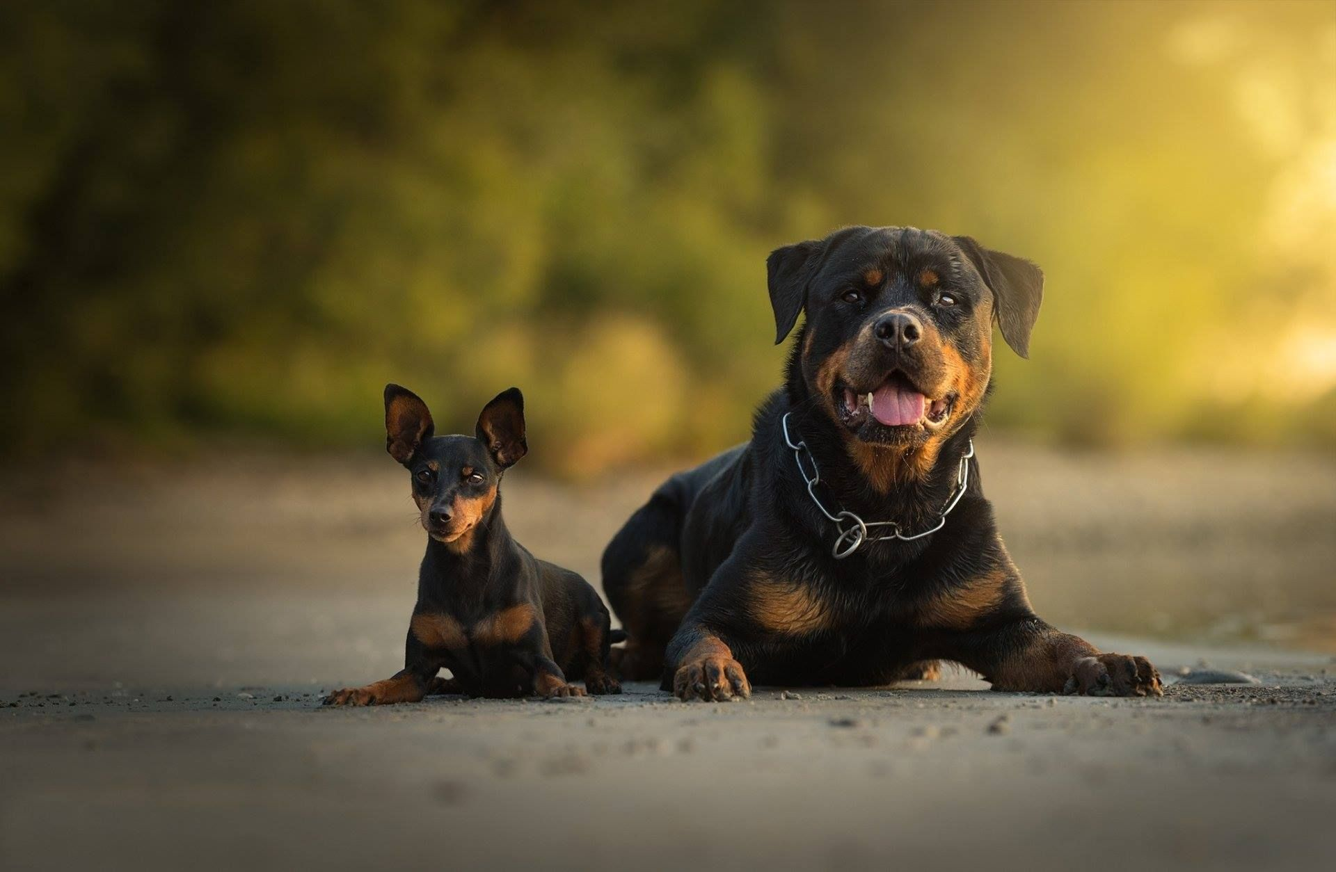 Pin By Annette Byrd On Bull Doggies Dogs Rottweiler Lovers Rottweiler