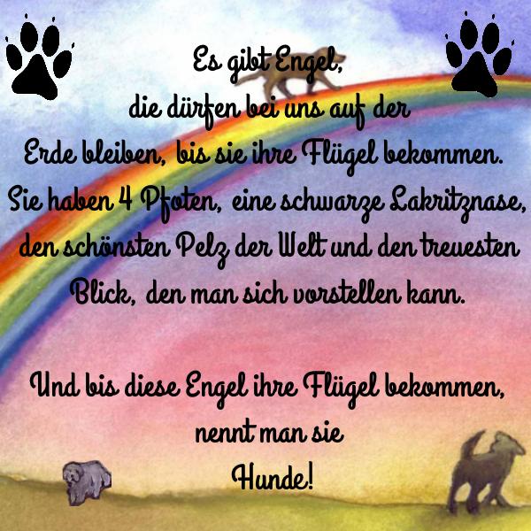Bildergebnis Für Regenbogenbrücke Hund Gedicht Regenbogenbrücken Hund Hunde Gedichte Trauer Um Hund