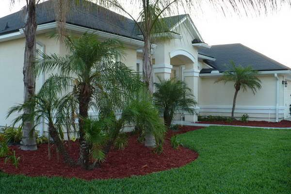 Tree Landscaping Ideas Front Yard With Palm Trees Bloombety