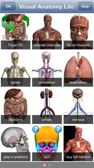 Visual Anatomy: learn the names of muscles, bones, organs, and ...