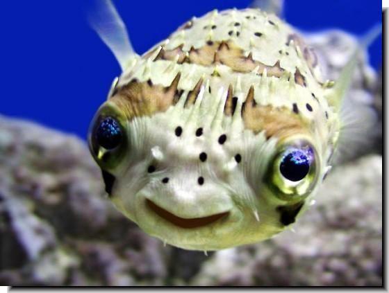 Google Image Result For Http Jakethecake Files Wordpress Com 2011 04 Porcupin Smiling Animals Happy Animals Ocean Animals
