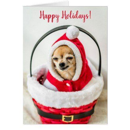 Chihuahua Dog Christmas Card Christmas card photography and