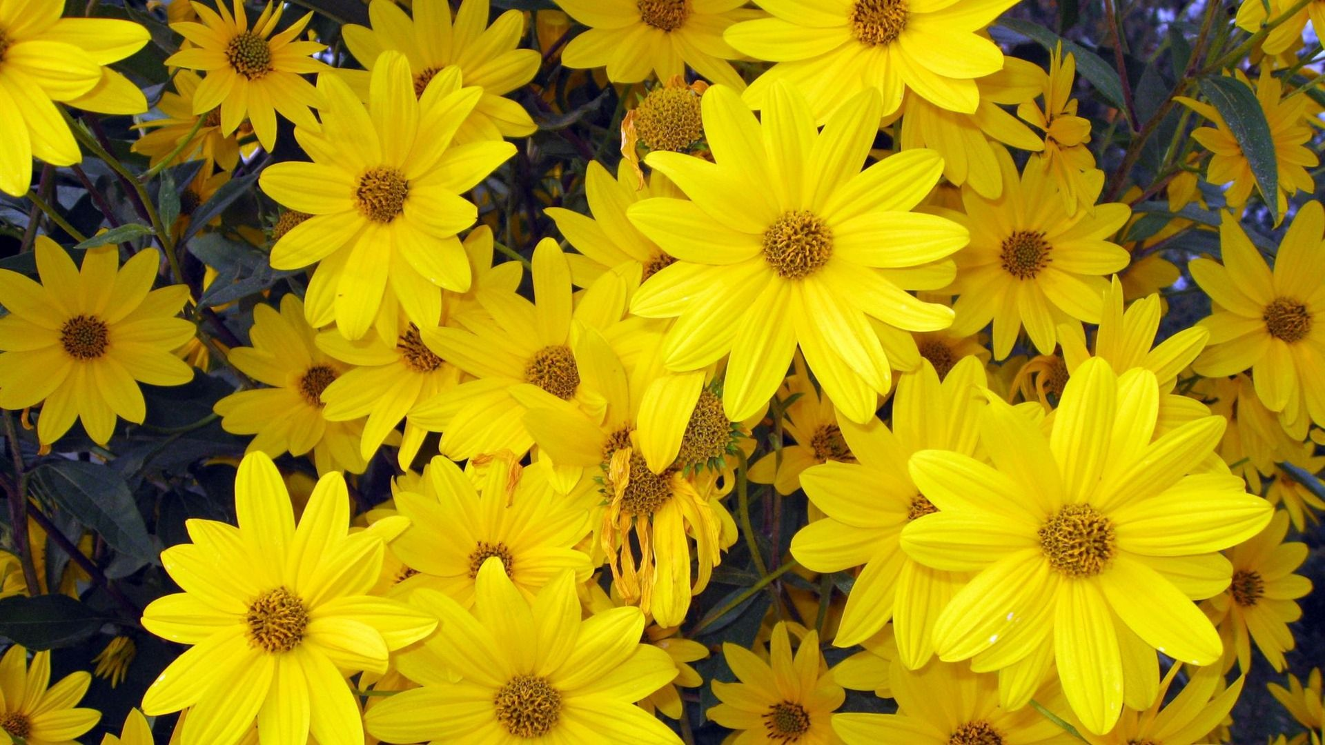 Yellow Spring Flowers wallpaper Yellow spring flowers