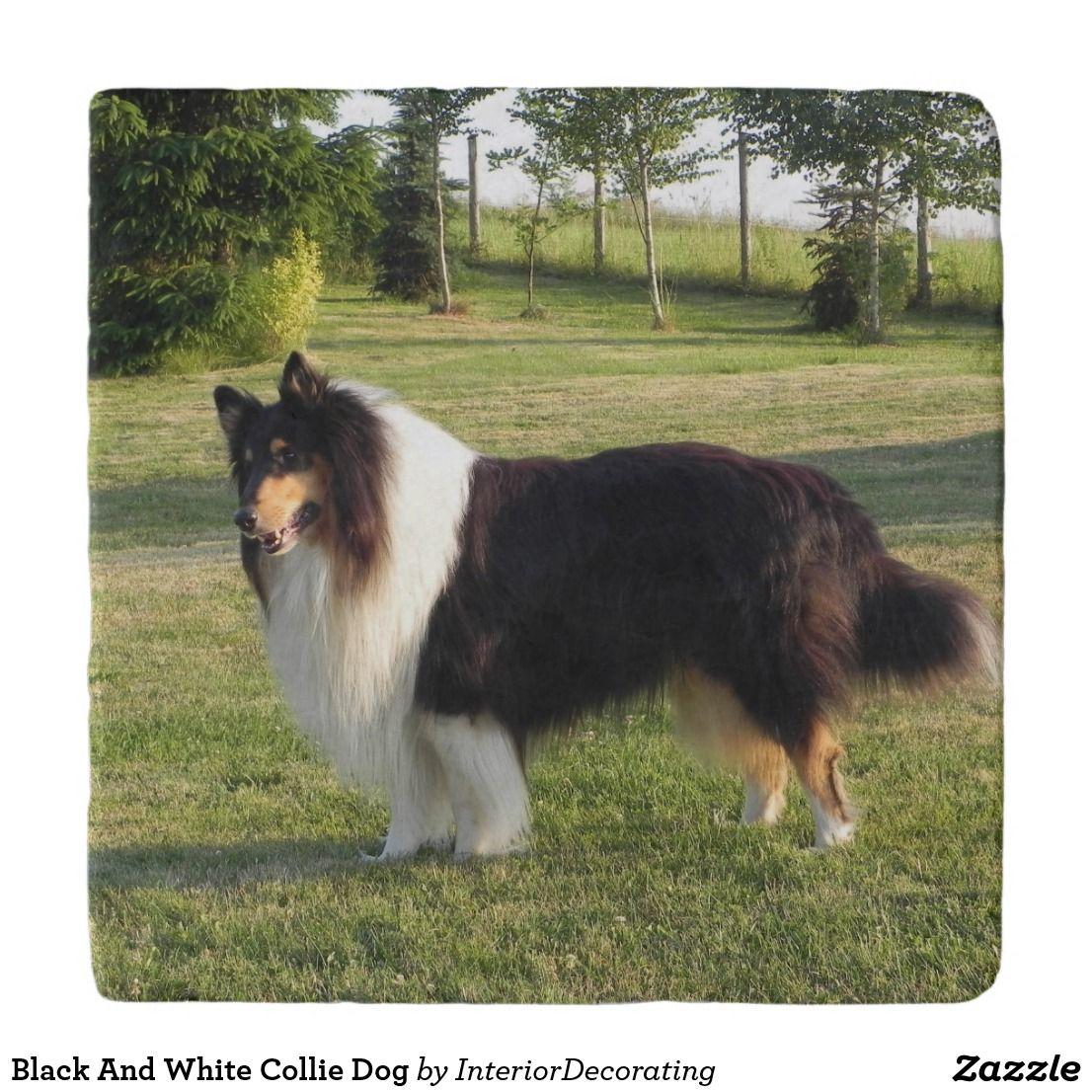 Black And White Collie Dog Trivet Zazzle Com Collie Dog Dog