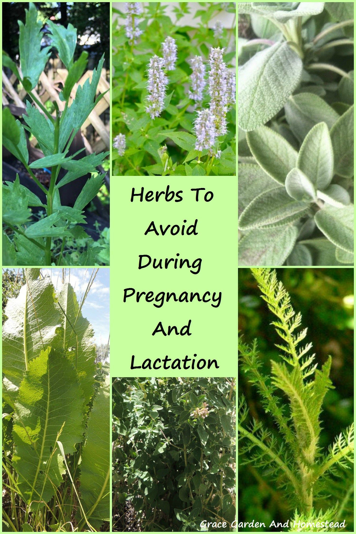 Herbs have a wide range of uses from flavoring foods to treating ailments. But many should be avoided during pregnancy and lactation. Here are a list of common herbs to avoid during pregnancy.