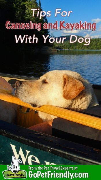 Tips For Canoeing Kayaking Dogs Plan Safe And Fun Adventure