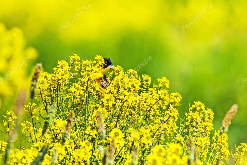 Spring Nature Green Yellow Nature Background Cute Little Bird Black Sto Affiliate Green Yellow Spring Nature Ad Spring Nature Nature Yellow Background