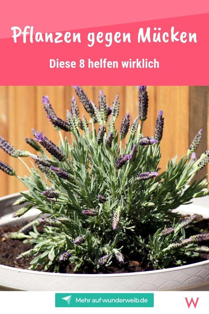 8 Pflanzen, die Mücken fernhalten #herbsgarden