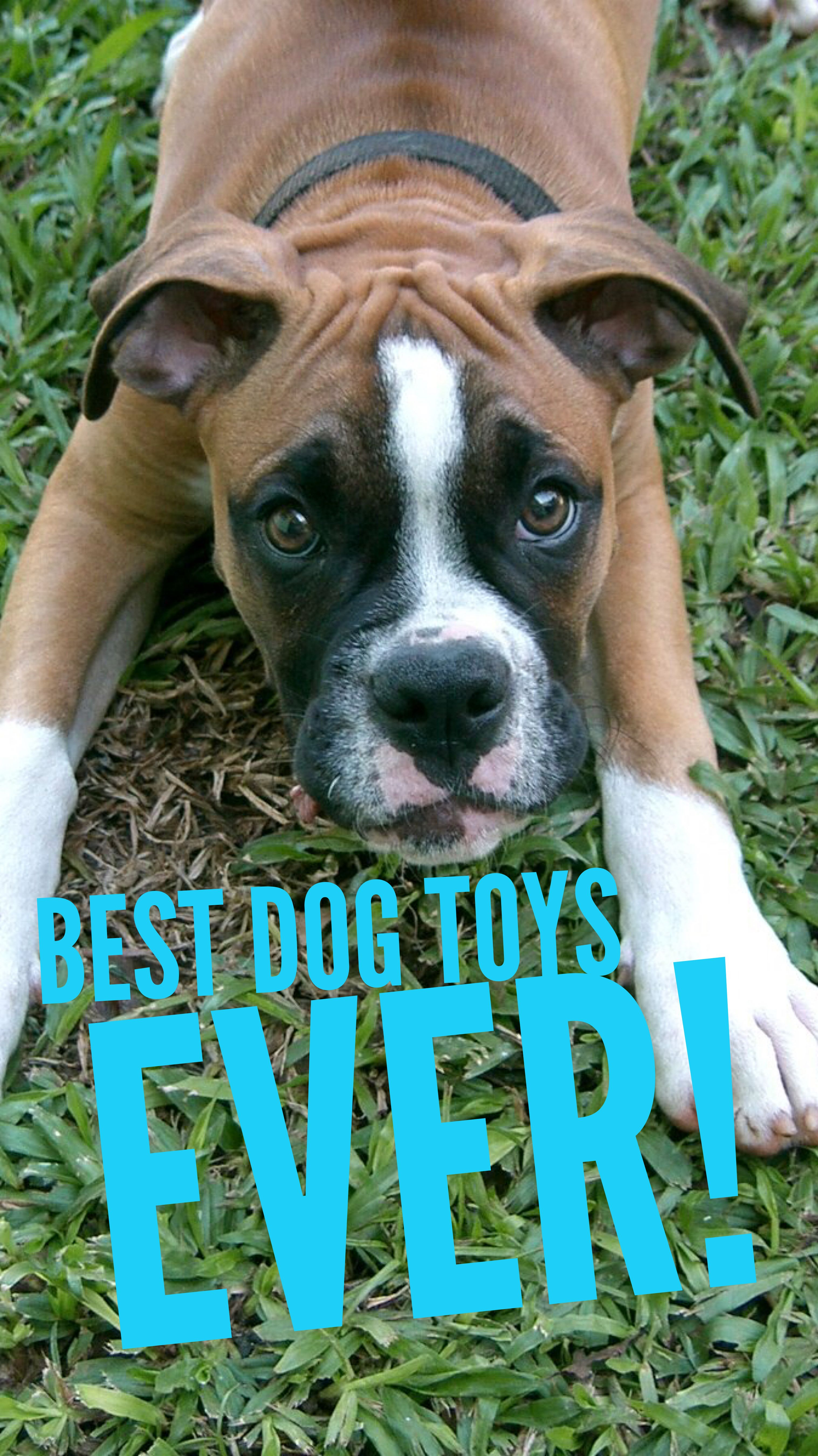 West Paw Dog Toy Review The Best Choice For Active Chewers Dog