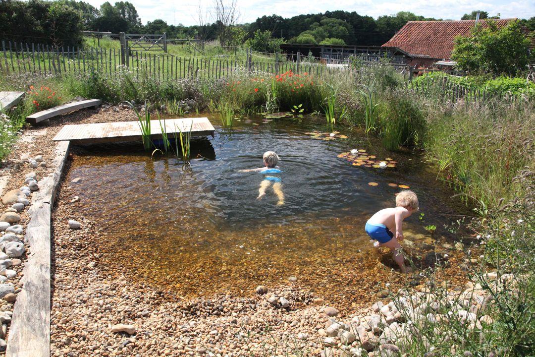 Organic Plunge Pool Natural Swimming Ponds Swimming Pond Diy Swimming Pool
