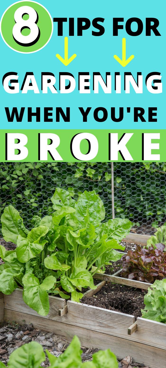 Gardening When You're Broke: 8 Tips