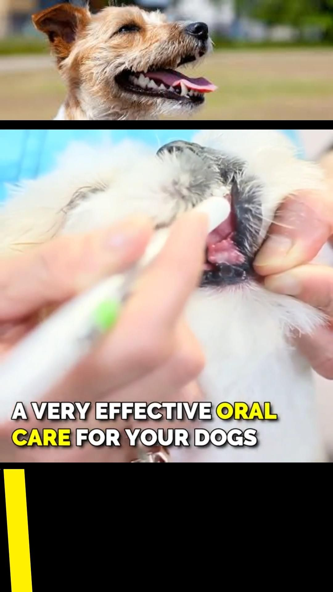 🐶 Your pet's bad breath is a bigger problem than you thought! Stop periodontal disease in its tracks. Stop harmful bacteria into your pet's organs with this Pet Teeth Repairing Kit. ⭐⭐⭐⭐⭐ Recommended by the Vet Community of Dental Care #dog #dogs #doglover #doglife #doglovers #dogtraining