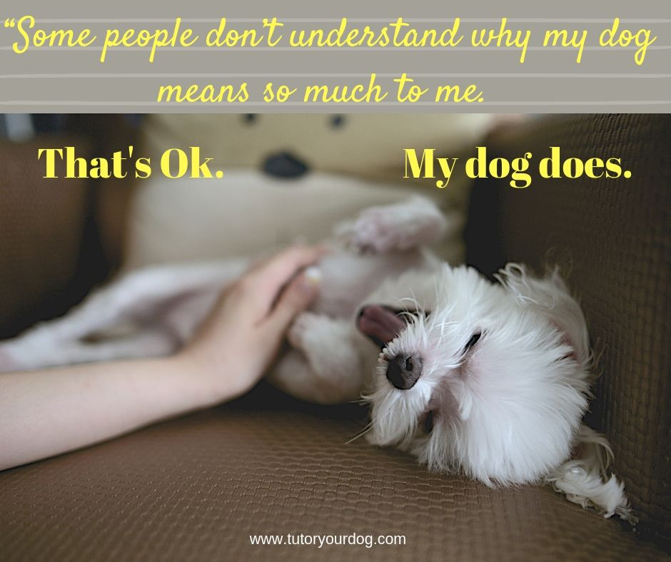 How To Make The Most Of Your Dog Training Time Online Dog
