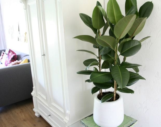 woonkamer plant - Google zoeken | PLANT | Pinterest | Plants and ...