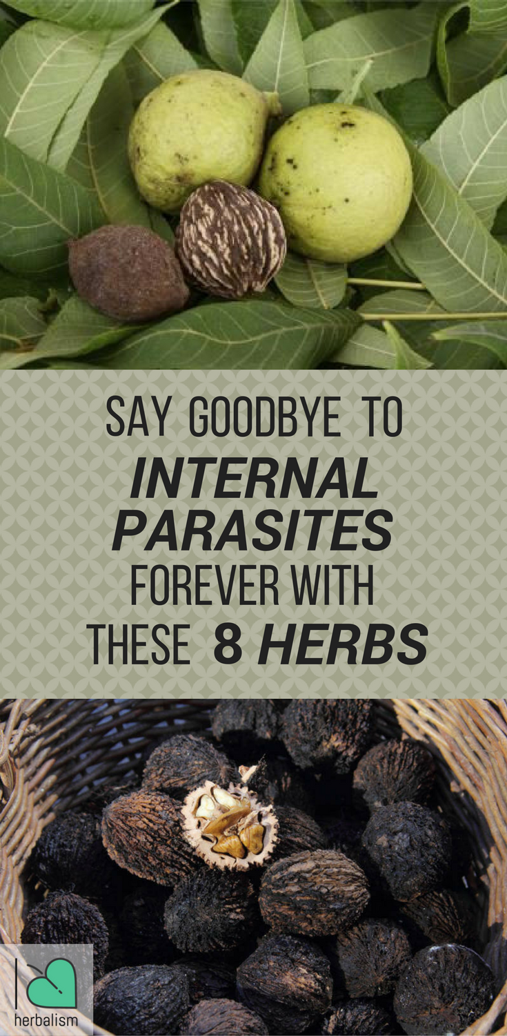 internal parasites can trigger multiple health problems herbs are one way to strengthen the body