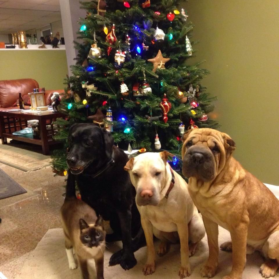 Rosie, Gordo, and Jasmine are all ready for some