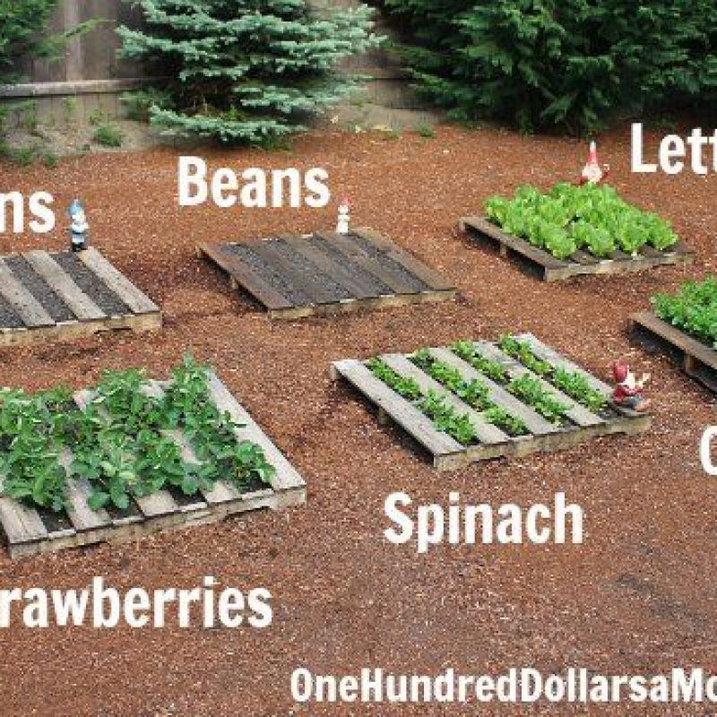 Pallet Veggie Garden: Old Wooden Pallets Are Fantastic For Garden DIY Projects