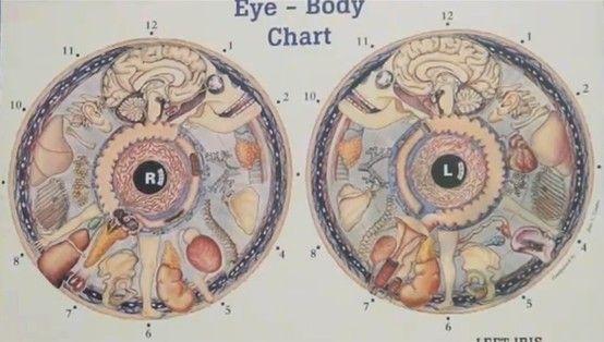 Iridology - Learn to read your eyes for health | Iridology ...