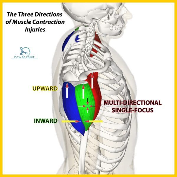 Deltoid Origin Insertion Action Nerve Supply Scapula And Muscles