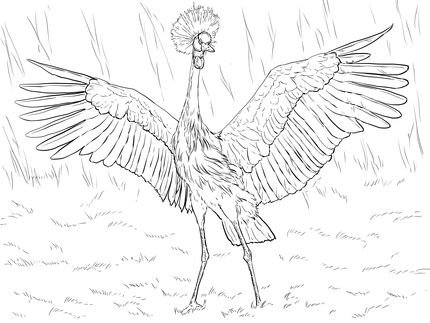 Click To See Printable Version Of African Black Crowned Crane